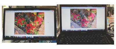 Cùng một hình hoa, xem màu sắc khác nhau vì màn hình