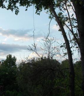 Mây trên rừng Scibilia Photo by PCH – Tháng 5.2014