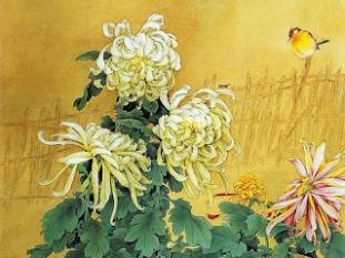 Hoa cúc. Zou Chuan