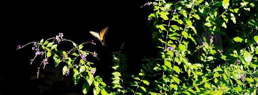 Cánh hoa rơi Photo by Đinh Trường Giang
