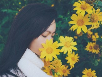 Top 45+ Những bài thơ, câu thơ hay nói về hoa Dã Quỳ đáng yêu